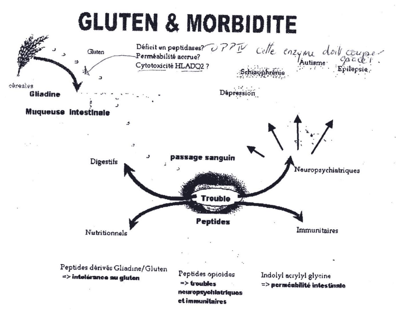 Gluten-&-Moribidite
